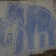 elephant_fpw